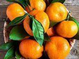پیش بینی برداشت ۹ هزار تن نارنگی در گلستان