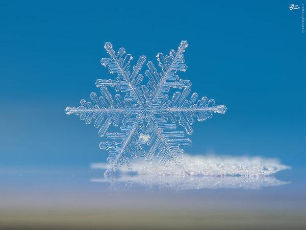 عکس/ دانه برف زیر میکروسکوپ