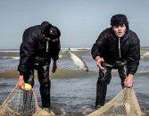 فصل صید ماهیان استخوانی از خزر