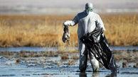 جمع آوری لاشه پرندگان آبزی مهاجر در سواحل بندرترکمن/ گردشگران از رفتن به داخل آب خودداری کنند