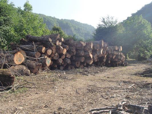 کاهش 50 درصدی نشانه گذاری قطع درختان جنگلی گلستان