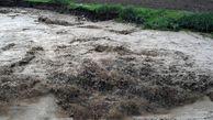 هشدار افزایش آب گرگانرود براثر بارندگی /دستور تخلیه منازل صادر نشده است.