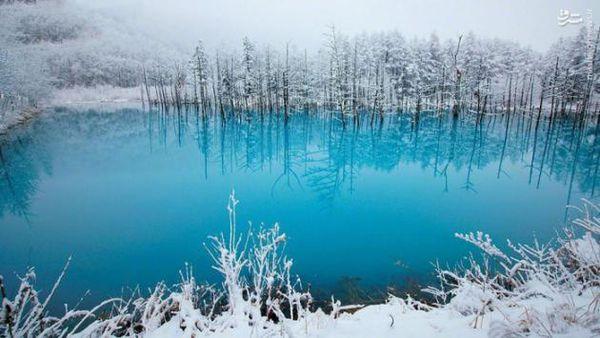 تصاویر/ برکه آبی زیبا در ژاپن