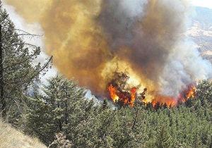 خسارت آتش به ۱۴۰ هکتار جنگل سوزنی برگ