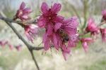 زمستان بهاری/ بهار در جنگل گلستان+ تصاویر