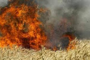 اطفای حریق گندمزار در یکی از روستاهای گرگان