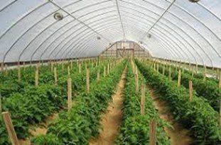کشاورزان از آب موجود و در دسترسشان در فضای گلخانه استفاده کنند