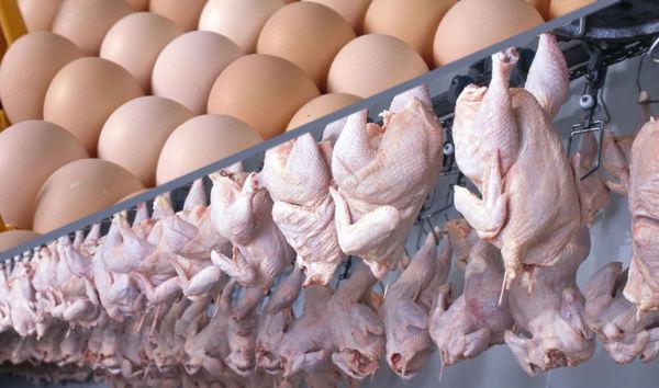 زیرساخت صادرات مرغ گلستان همراه تولید رشد ندارد