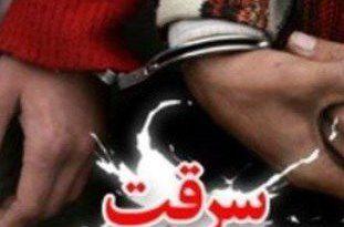 دستگیری سارق سابقهدار با 5 فقره سرقت احشام در کردکوی