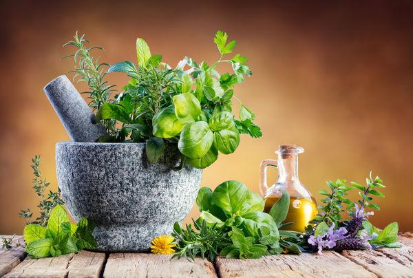 6 گیاه دارویی که تأییدیهی علمی دارند