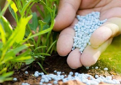 نبود کمبود در بخش نهادههای کشاورزی گلستان