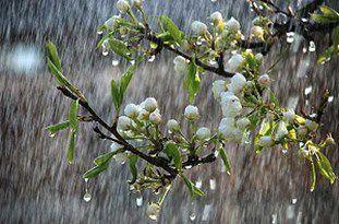 آسمان گلستان بارانی است