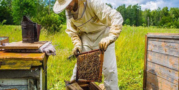نگاه سنتی به صنعت زنبورداری و غفلت زنبورداران گلستانی از محصولات جانبی زنبور عسل