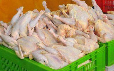 قیمت مرغ در خردهفروشیها ۷۷۰۰ تومان