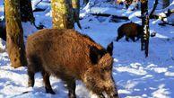 درخواست محیطزیست گلستان برای مهربانی با وحوش در سرما و برف