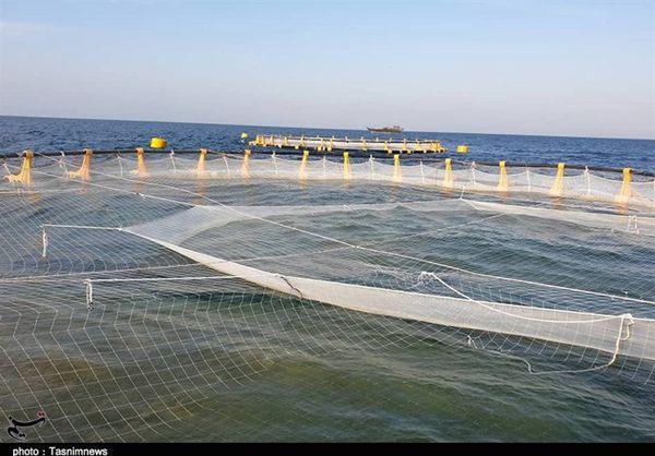 تولید ماهی در قفس تا پایان برنامه ششم باید به ۲۰۰ هزار تن در کشور برسد