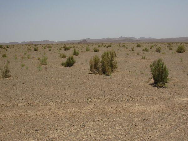 حدود 300 هزار هکتار از اراضی گلستان در معرض بیابانی شدن است