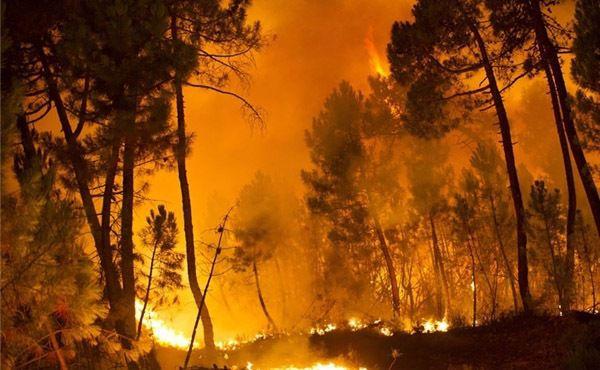 آتشسوزی در پارک ملی گلستان جان گرفت