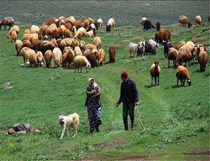 خسارت 254 میلیارد تومانی خشکسالی به عشایر گلستان