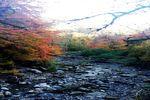 پاییز هزار رنگ جنگل «شفیع آباد» گلستان