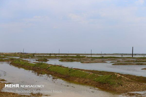 سیلابِ ۹۰ درصد اراضی کشاورزی تخلیه شد