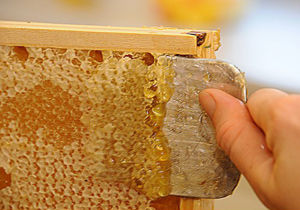 تولید عسل در رامیان