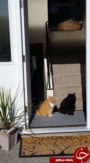 گربه و سایه زندهاش، بمب فضای مجازی + تصاویر