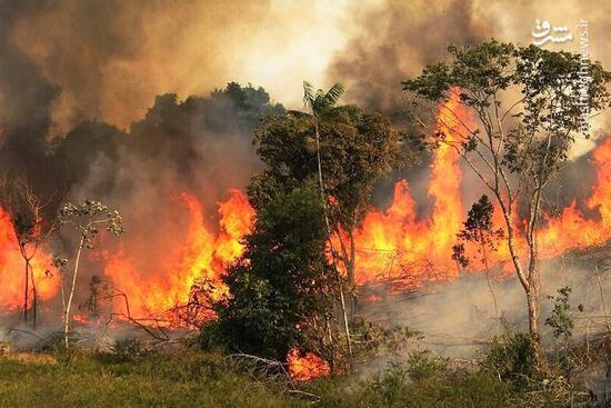 فیلم/ ادامه آتشسوزی جنگلها و مراتع کهگیلویه