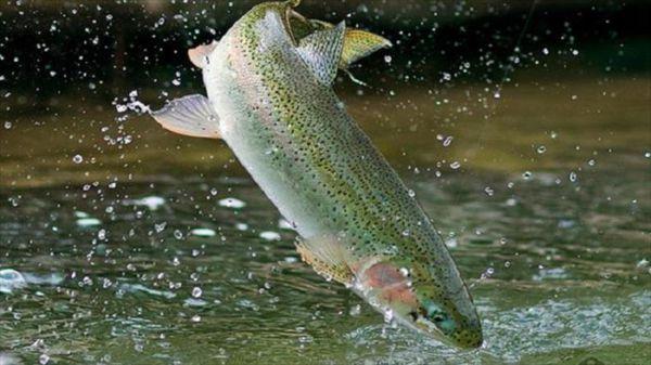 هشدار سازمان هواشناسی به استخرداران پرورش ماهی
