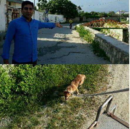 وجود سگ هار و ولگرد در مقابل یکی از مدارس کردکوی+عکس