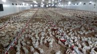 مرغداران گرگانی نسبت به تهیه سوخت جایگزین اقدام کنند