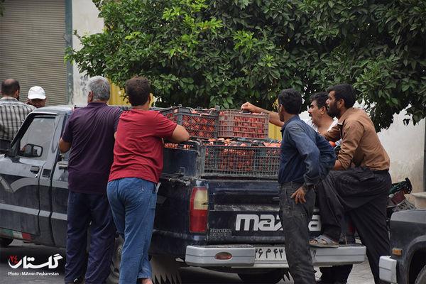 دلال ها بازار گوجه فرنگی گلستان را در دست گرفته اند