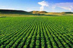 افزایش تولید محصول با شخم تابستانه در استان