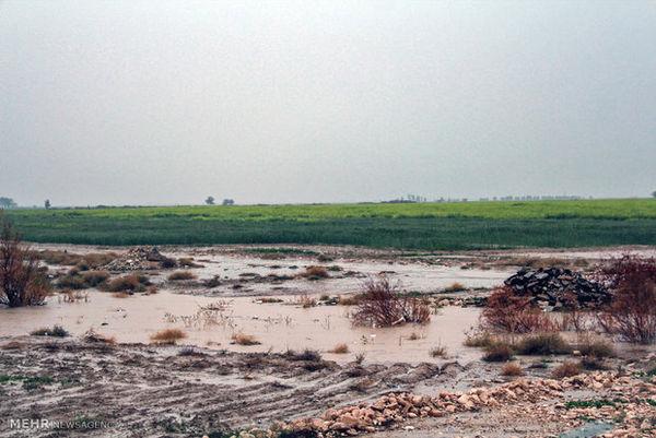 سیلاب به بخشی از اراضی کشاورزی در گلستان خسارت زد