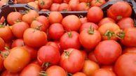 """شرایط صادرات """"گوجه"""" تسهیل شد! +سند"""