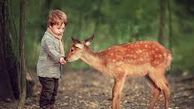 نباید به توله های رها شده حیوانات در حیات وحش دست بزنیم