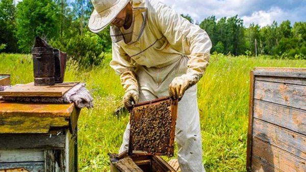 تولید هزار و ۲۵۰ تن عسل در گلستان/افزایش ۱۰ درصدی