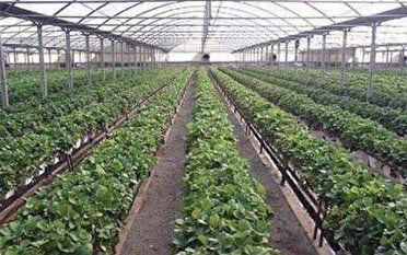 حمایت جهادکشاورزی از ایجاد گلخانه در گلستان؛از پرداخت تسهیلات تامجوز تغییر کاربری