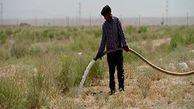 کاشت و آبیاری نهال در وسط بیابان + فیلم