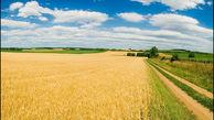 پرداخت وام ارزان قیمت، راهکار افزایش تولید گندم کشور است