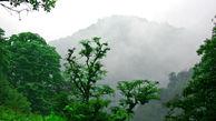اختصاص 47 میلیارد تومان برای احیای جنگل های زاگرس و منطقه ایران مرکزی در لایحه بودجه 99